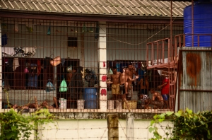 From behind bars, hundreds of detainees suspected of drug use are enrolled in compulsory rehabilitation in the capital, Vientiane. (Photo courtesy of Martin Abbiati/ Photographer)